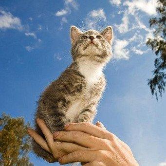 Как правильно держать кошку