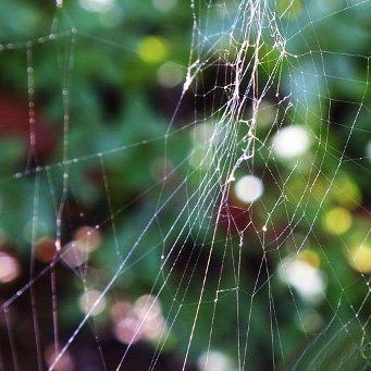 Своими руками паука с паутиной