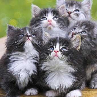 От чего дают котам ношпу