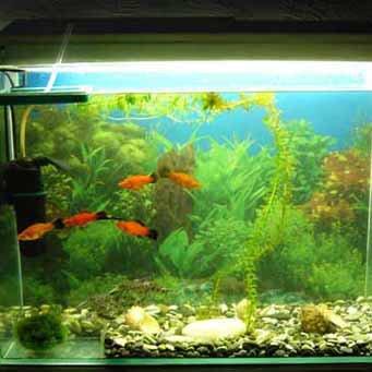 Установка внутреннего фильтра в аквариум.
