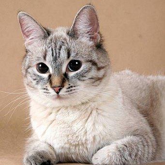 Глисты у кошек и котов: виды (с названиями симптомы