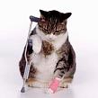 Кот после укола хромает: когда пройдет хромота? Кот после укола хромает, продолжать ли колоть?