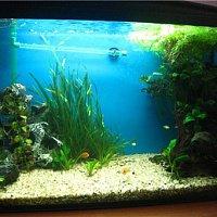 Тест-драйв: JEBO 838 - Внешний фильтр для аквариума.