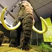 Находки русских археологов: самые знаменитые мамонты в России