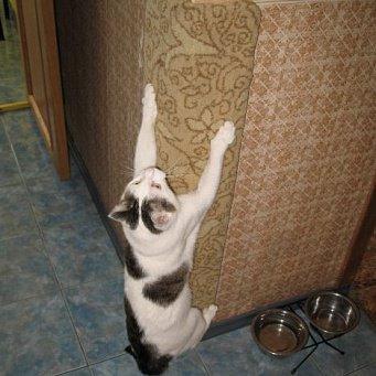 Своими руками угловые когтеточки для кошек