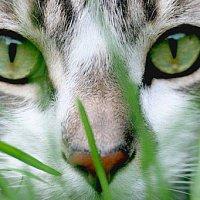 Как вывести лишай у кошки?