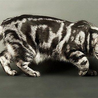 Красивый окрас котов