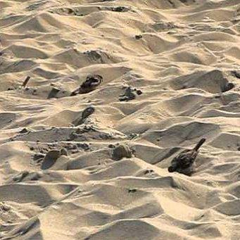 Воробей купается в песке: http://www.8lap.ru/section/interesnye-fakty/vorobey-kupaetsya-v-peske/