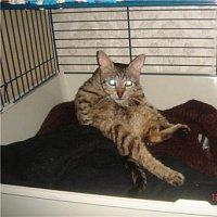 Ожидается подключение площадки.  Одной из существующих болезней кошек, имеющей довольно широкое распространение...