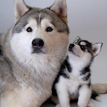 интересные факты о собаках для презентации