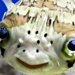 Где живет ядовитая рыба фугу?