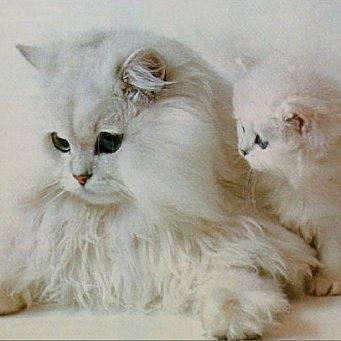 От чего лечить кота водкой