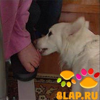 Кот Лижет Хозяйке Порно