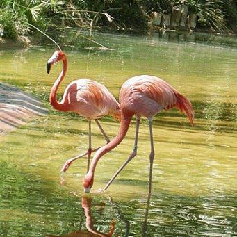 Фламинго доклад красная книга 7337