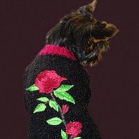 Вязаная одежда для собак и кошек Животные, птицы - Корма и аксессуары.
