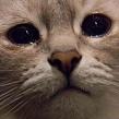 У кота из заднего прохода выделения: совет ветеринара