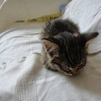 У котёнка понос как лечить