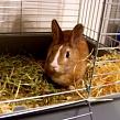 Что делать, если кролик ничего не ест?