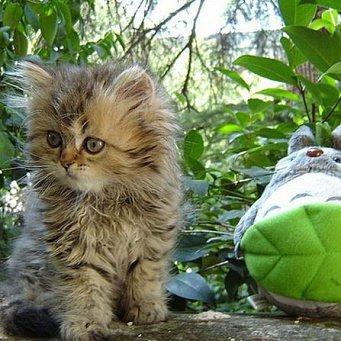Кот постоянно трясёт лапой