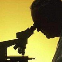 Микоплазмоз - инфекционное заболевание у кошек, которое поражает дыхательные органы, слизистые оболочки...