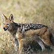 Животные питающиеся падалью: особенности животных-падальщиков