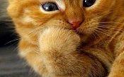 Как отучить кота сосать