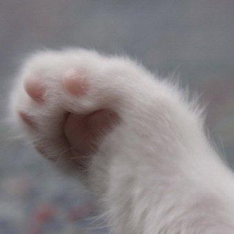 почему кошка растопыривает ноздри и дышит