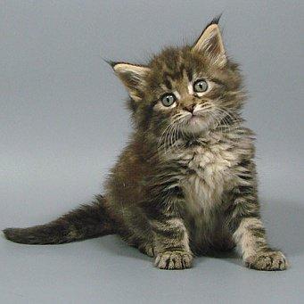 рахит фото у котят