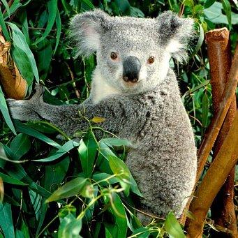 Природа и животный мир в австралии