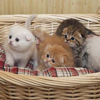 Какие прививки делать котенку и когда - 3ff