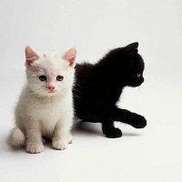 """Предпросмотр схемы вышивки  """"Чёрный и белый """".  Чёрный и белый, чёрное, белое, котёнок."""