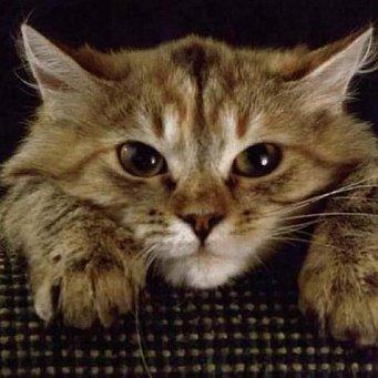 APUS RU — В США кот спас жизнь хозяину, позвонив по