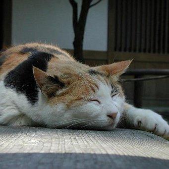 у кошки диарея что делать в домашних условиях