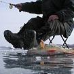 Рыбы Байкала: разнообразие видов