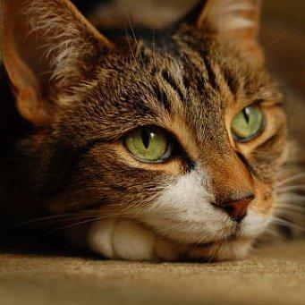Беременность кошки по неделям в картинках