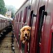 Перевозка домашних животных в поезде РЖД. Правила перевозки животных в поезде РЖД