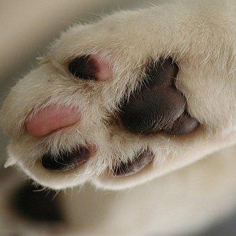 лапа кошки фото