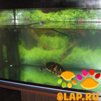 Аквариум для черепах красноухих своими руками