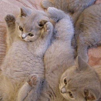 Когда котенку делать первые прививки и какие цена - 3c45f