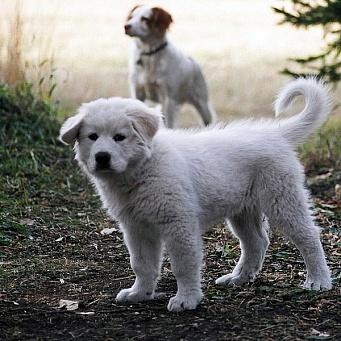 фото свищ у собаки