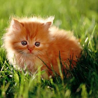 Пушистый котенок своими руками