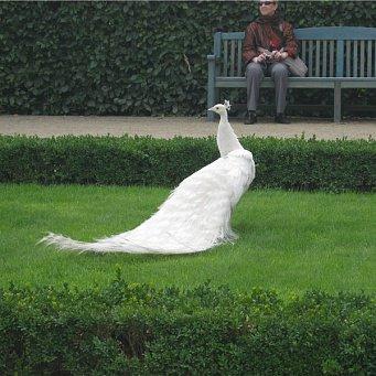 Птица гордый символ бессмертия и