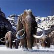 Непознанное в животном мире: живут ли мамонты в Сибири?
