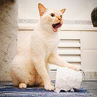 Цистит - это...  Из всех домашних животных кошки наиболее подвержены заболеванию циститом.